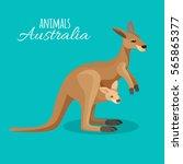 Australia Kangaroo Animal...