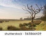 dead tree at romney marsh in...   Shutterstock . vector #565866439