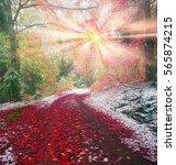 autumn in transcarpathia... | Shutterstock . vector #565874215