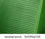 one flat banana leaf background ... | Shutterstock . vector #565906135