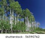 Trees In Utah