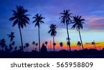 silhouetted of coconut tree... | Shutterstock . vector #565958809