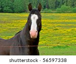 Brown Horse In A Field Of...