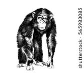 monkey sketch vector | Shutterstock .eps vector #565983085
