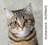 cat's portrait | Shutterstock . vector #56598643