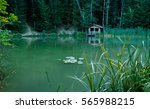 a small pond in the forest and... | Shutterstock . vector #565988215