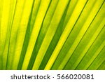 close up of the leave texture... | Shutterstock . vector #566020081