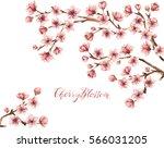 cherry blossom spring flowers... | Shutterstock . vector #566031205