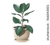 vector photorealistic plant... | Shutterstock .eps vector #566043001