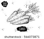 hand drawn sketch style carrot. ... | Shutterstock .eps vector #566073871