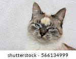 Stock photo bored cat 566134999