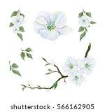 watercolor set of blooming...   Shutterstock . vector #566162905