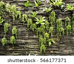 vertical garden on rock brick... | Shutterstock . vector #566177371