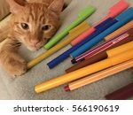 Stock photo cat is playing with pens 566190619