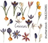 collection of vector realistic... | Shutterstock .eps vector #566224081