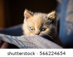 Stock photo cute little kitten 566224654