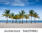 palm trees by the ocean in key... | Shutterstock . vector #566294881