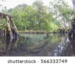 emerald green water and tree...   Shutterstock . vector #566333749