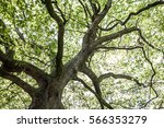 green natural background of... | Shutterstock . vector #566353279