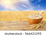 oat flakes in bowl. ears of...   Shutterstock . vector #566421295