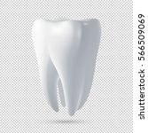 realistic vector human tooth... | Shutterstock .eps vector #566509069