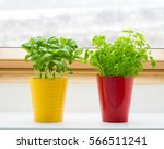 herbs on kitchen window | Shutterstock . vector #566511241
