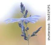 pterophoridae or paltsekrylye...   Shutterstock . vector #566519191