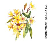 plumeria isolated on white... | Shutterstock . vector #566615161