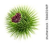 purple flower of burdoc with...   Shutterstock . vector #566631469