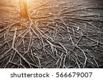 the roots of a large tree that... | Shutterstock . vector #566679007