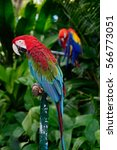 colorful macaw parrot standing... | Shutterstock . vector #566773051