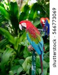 colorful macaw parrot standing...   Shutterstock . vector #566773069
