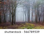 english woodland on a foggy... | Shutterstock . vector #566789539