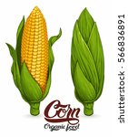 corncob isolated on white... | Shutterstock .eps vector #566836891
