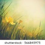 Daffodil Floral Spring...