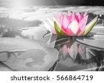beautiful lotus flower | Shutterstock . vector #566864719