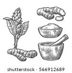 turmeric root  powder and... | Shutterstock .eps vector #566912689