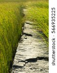 gaomei wetlands | Shutterstock . vector #566935225