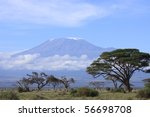 Snow topped Kilimanjaro framed by the open woodland of Amboseli - stock photo