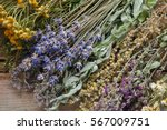 bunch of healing herbs on... | Shutterstock . vector #567009751