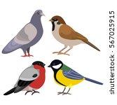 bird dove tit bullfinch | Shutterstock .eps vector #567025915