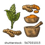 turmeric root  powder and... | Shutterstock .eps vector #567031015