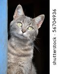 Blue Tabby Cat At The Door Of A ...