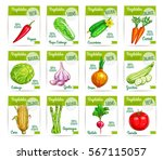 sale labels and cards with... | Shutterstock .eps vector #567115057