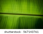 Banana Leave With Outdoor Back...