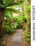 Pathway through rainforest at New Zealand - stock photo