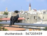 Crow Overlooking The City Of...