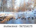 Bird On Winter Pond Ducks...
