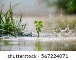 close up of a green plant while ... | Shutterstock . vector #567224071