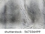 closeup fragment of fur... | Shutterstock . vector #567336499